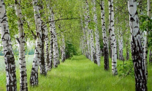 Drvo koje  skida kilograme