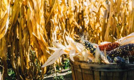 Četiri smrtna greha u hrono ishrani – lično Alen Delabo