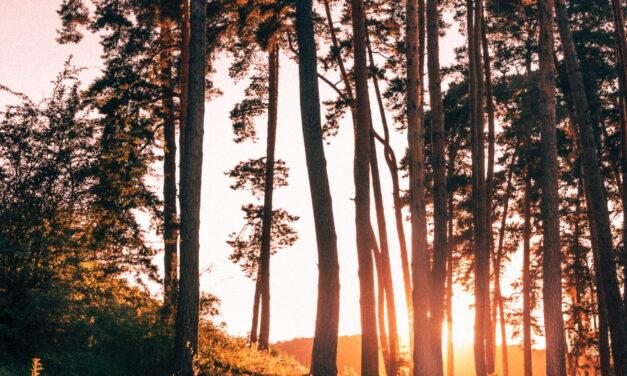 Lečenje drvećem i njihovom energijom