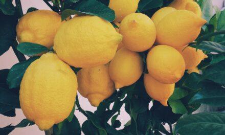 Smrznuti limun bolje iskoristiv nego svež
