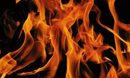 Požar i kako posle njega obnoviti biljni svet