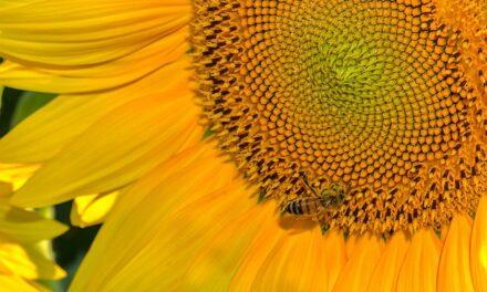Prof. dr Mića Mladenović o lečenju pčelinjim otrovom