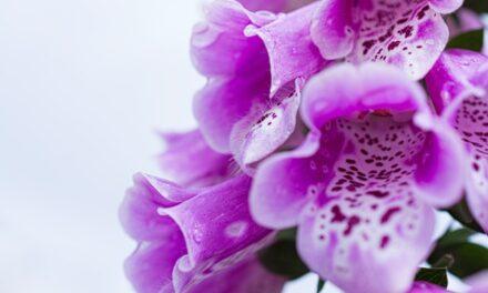 Otrovne biljke, šest naših najvećih opasnica