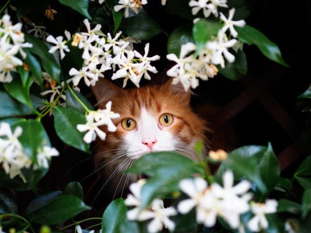 Jasmin, nekrunisani kralj među cvetovima
