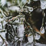 Kocka leda priziva mladost iz utočišta vetra