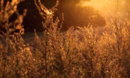 Alergije jesu uporne ali se upornošću i leče