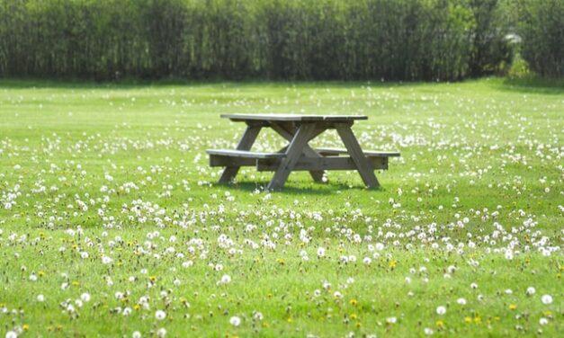 Trava i travnjaci, naša pluća i najveća radost