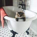 So za kupanje nastaje i u našoj kućnoj radionici