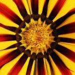 Cveće je radost i ako želiš sreću gaji ga