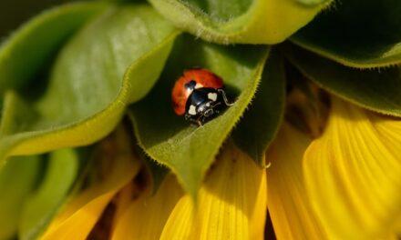Korisni insekti-najbolja prirodna zaštita za baštu