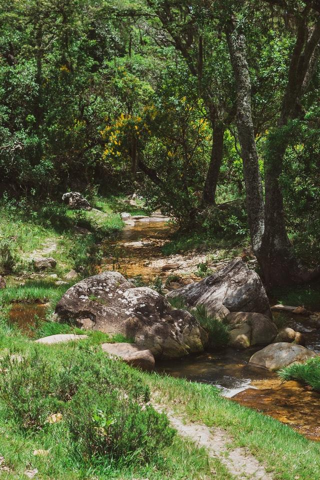 ekološki ustanak