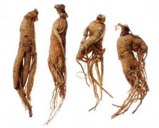 mandragora mitska biljka